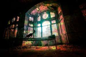 Photo of a black cat on a table in front of a large arched window in an old decaying house -